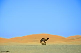 Como un camello buscando en el desierto una coca cola con tu nombre